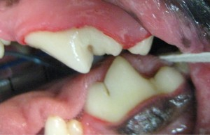 Dentistry After