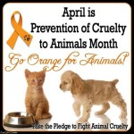 April-is-Fight-Animal-Cruelty-Month-Sign-Orange